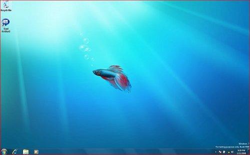 beta_fish_500x311