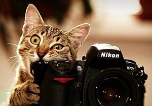 CatPhoto