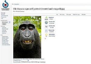 Monkey selfie 01 300