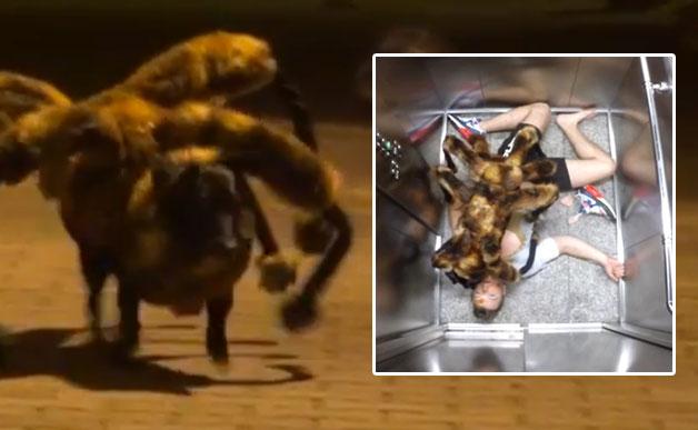 spider-dog-628
