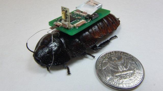cockroach biobot 600