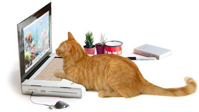 cat laptop 600 01