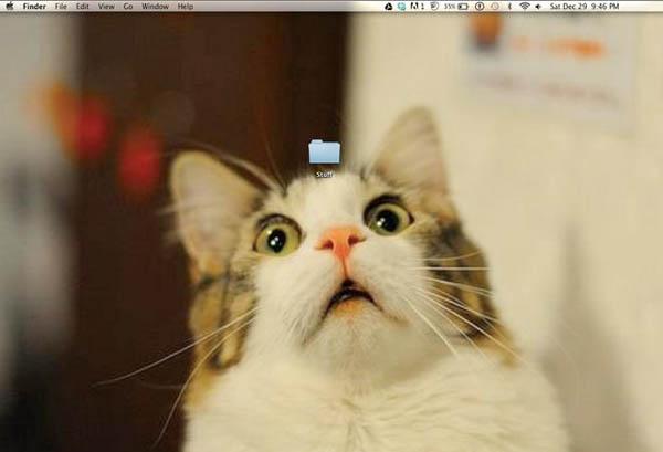 epic-desktop-cat-stuff