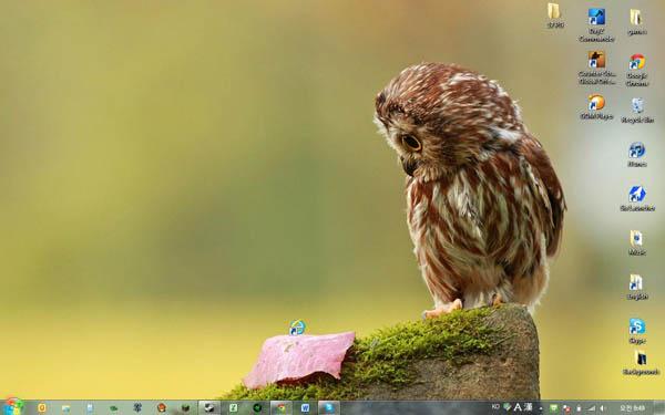 epic-desktop-explorer-owl