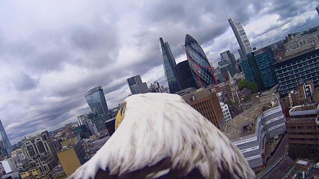 2950981-eagle+cam+-+city+view