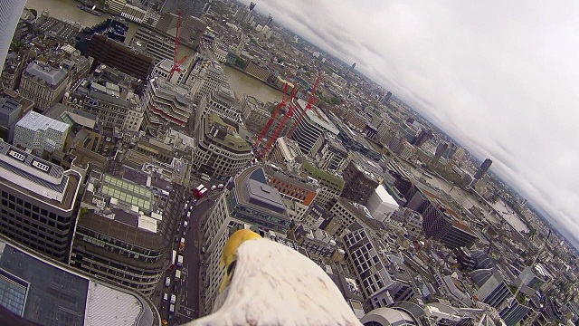 2950982-eagle+cam+-+london+bridge+view