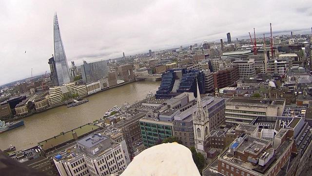 2950983-eagle+cam+-+the+shard+and+london+bridge