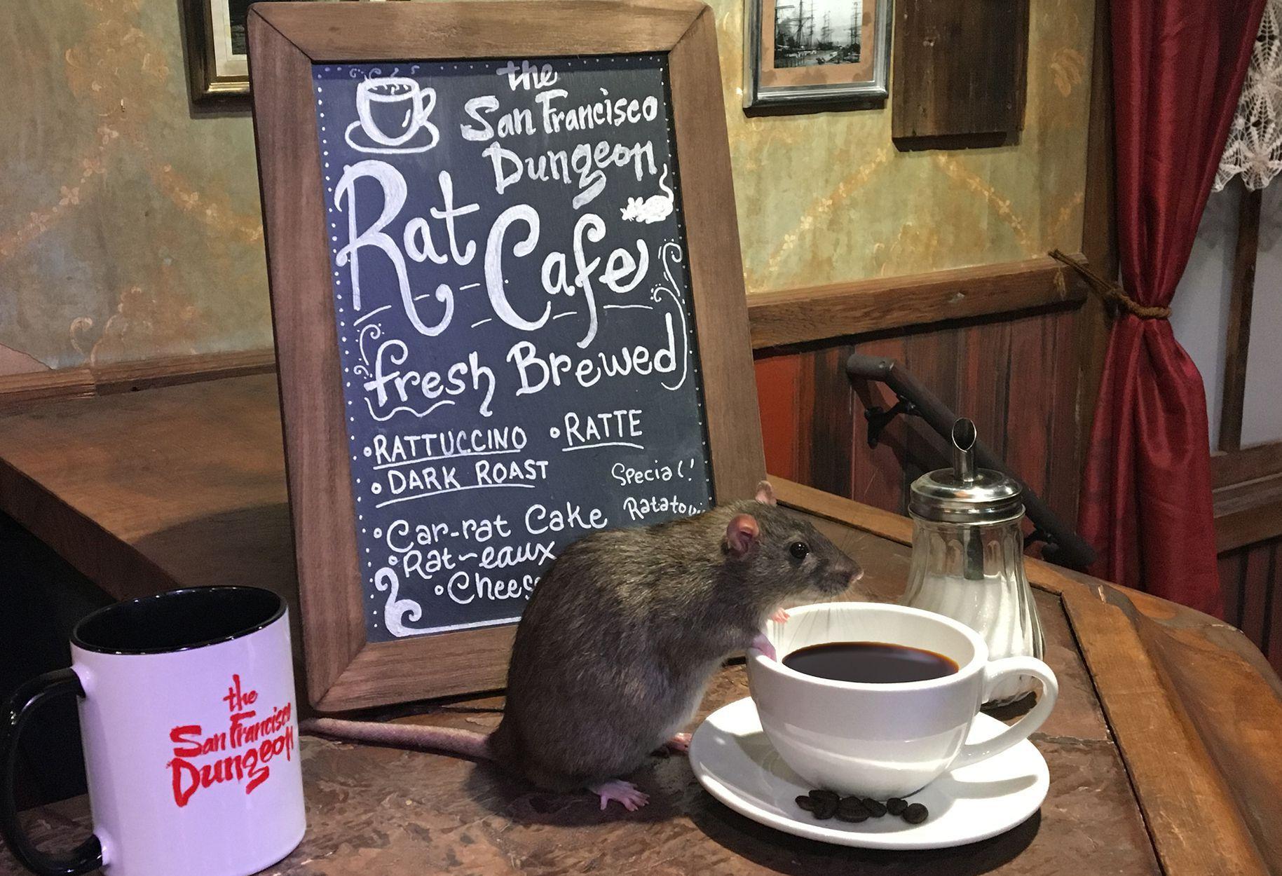 ratcafe