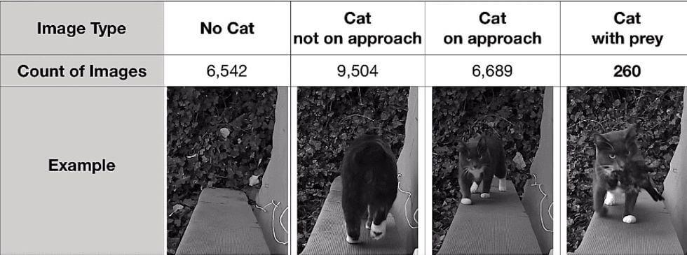 cat detect ai 600 02